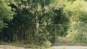 Dzika natura jest fascynującym dżunglą Obraz Stock