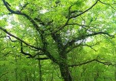 Dzika natura jest fascynującym dżunglą Zdjęcie Royalty Free