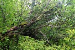Dzika natura jest fascynującym dżunglą Fotografia Royalty Free