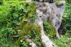 Dzika natura jest fascynującym dżunglą Obrazy Stock
