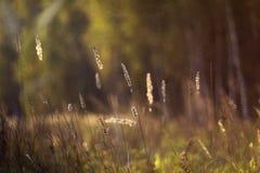 Dzika natura Rosja w lecie Zdjęcia Stock