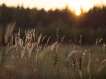 Dzika natura Rosja w lecie Fotografia Stock