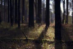 Dzika natura Rosja w lecie Obraz Stock