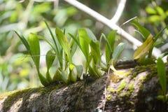 Dzika orchidea na drzewie obraz stock