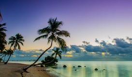 Dzika palma: Islamorada, Floryda Zdjęcie Royalty Free