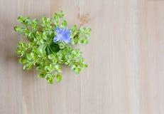 Dzika piękna łąka kwitnie na drewnianym tle Odgórny widok Odbitkowa przestrzeń dla teksta Obraz Royalty Free