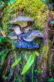 Dzika pieczarka w Heceta głowy latarni morskiej stanu parku Florencja, Oregon Zdjęcie Stock