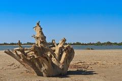 Dzika plaża Obraz Stock
