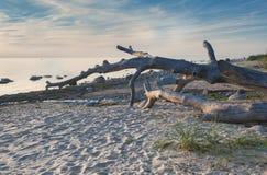Dzika plaża morze bałtyckie przy świtem Obrazy Royalty Free