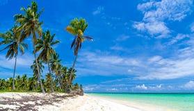 Dzika plaża z drzewkami palmowymi Zdjęcia Royalty Free