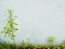 Dzika roślina na ogrodzeniu ściana Obraz Stock