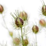 dzika roślinnych Obraz Stock