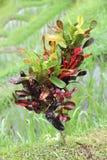 dzika roślinnych Obrazy Royalty Free