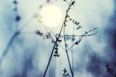 Dzika roślina w zimie; Chiński atramentu obrazu styl Obrazy Royalty Free