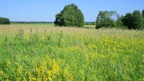 Dzika Rosyjska łąka w Czerwu zdjęcie wideo