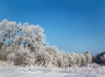 dzika scenerii zima Obraz Royalty Free