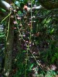 Dzika storczykowa roślina fotografia royalty free