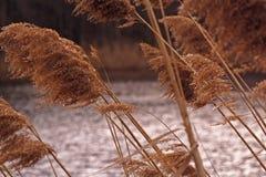 dzika trawa Zdjęcie Royalty Free