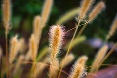 Dzika trawa i światło słoneczne zdjęcia royalty free