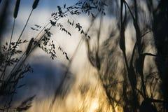 Dzika trawa w polu z niebieskim niebem w tle fotografia stock