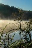 Dzika trawa z rosą, spokojny wczesny poranek na jeziorze, świt, pierwszy promienie słońce Pojęcie sezony, środowisko zdjęcie royalty free