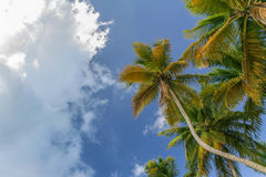 Dzika tropikalna plaża w wyspie karaibskiej Fotografia Stock
