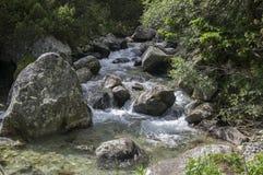 Dzika woda, strumienia Maly studeny potok w Wysokim Tatras, lato turystyczny sezon, dzika natura zdjęcia stock