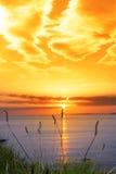 Dzika wysoka trawa na dzikim atlantyckim sposób pomarańcze zmierzchu Obrazy Stock