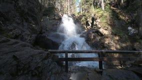 Dzika zatoczka w bavarian lesie zbiory wideo