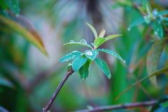 dzika zielona roślina Obrazy Royalty Free