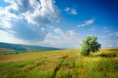 Dziki łąka krajobraz obrazy royalty free