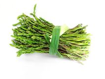 dziki acutifolius asparagus Obraz Royalty Free