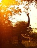 dziki afrykański słoń Zdjęcia Stock