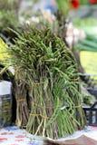 Dziki asparagus Obraz Royalty Free