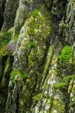 Dziki Atlantycki sposób: Rzadko wegetować strzępiaste denne falezy Skellig Michael zawierają zróżnicowanych cienie zieleń, kolor  zdjęcia royalty free