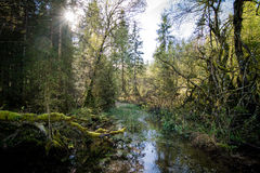 Dziki Bawarski forst przy Berchtesgaden Bavaria Zdjęcie Stock