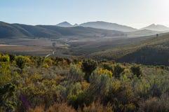 Dziki Bush i góry krajobraz, Zachodni przylądek, Południowa Afryka Obrazy Royalty Free