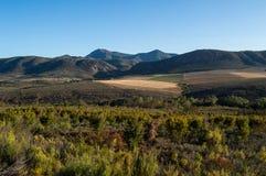 Dziki Bush i góry krajobraz, Zachodni przylądek, Południowa Afryka Zdjęcia Stock
