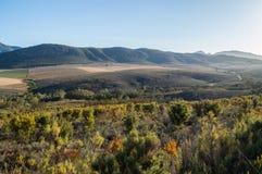 Dziki Bush i góry krajobraz, Zachodni przylądek, Południowa Afryka Fotografia Royalty Free