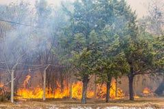 Dziki Bush ogień zdjęcia stock
