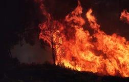 Dziki bushfire palenie z kontroli zdjęcie stock