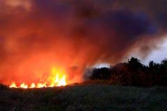 dziki bushland płonący ogień zdjęcia stock