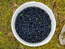 Dziki czarnej jagody wiadro Obrazy Royalty Free