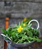 Dziki dandelion liść Obraz Royalty Free