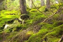 Dziki drewno Zdjęcie Stock