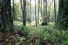 Dziki drewno Fotografia Stock