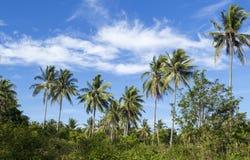 Dziki drzewko palmowe na tropikalnej wyspie tła niebo błękitny jaskrawy Obraz Royalty Free