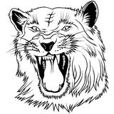 dziki duży kot Fotografia Royalty Free