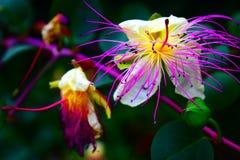 Dziki egzotyczny kwiat znajdujący na podwyżce zdjęcie stock