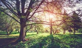 Dziki ekologia parka krajobraz zdjęcia royalty free